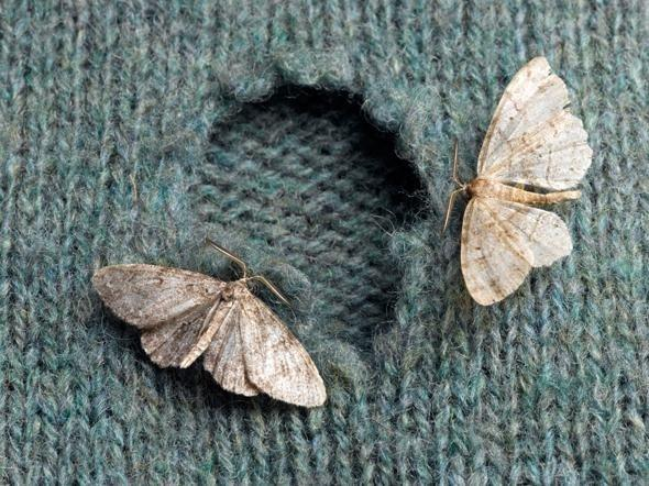 cashmere : beware the moths